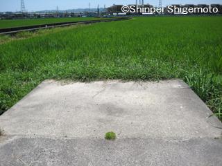 machikusa_mini.jpg